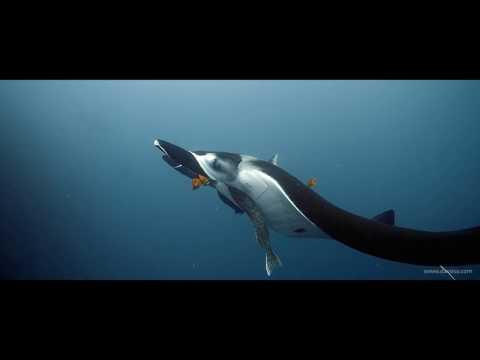 DAVOSA Apnea Diver Automatic von Nik Linder by Behind the Mask